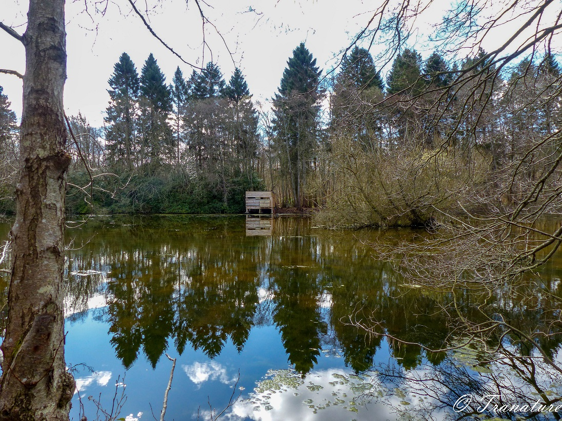 tree-lined pond with a bird hide across the water