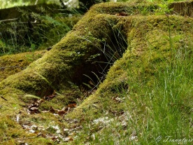 close up of a tree stump in a forest covered in moss with grass and ferns