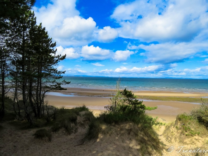 View across Moray Firth from the pine-clad shore
