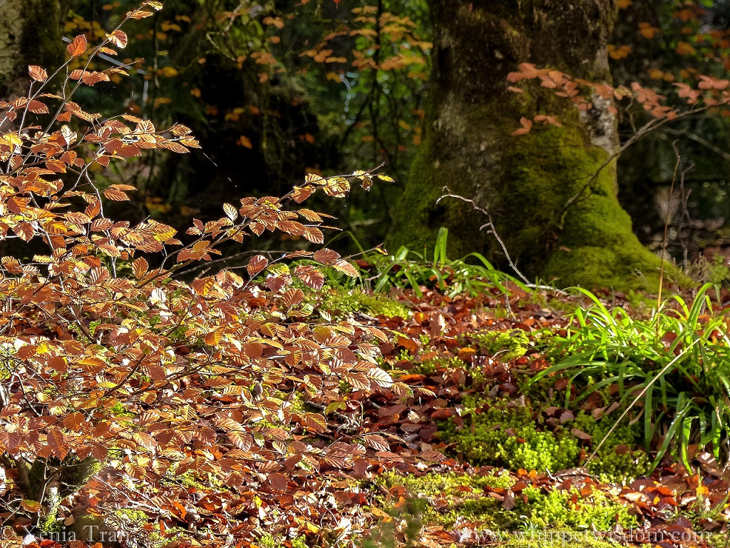 close up of the base of a moss-covered tree trunk with autumn leaves and grass in the foreground