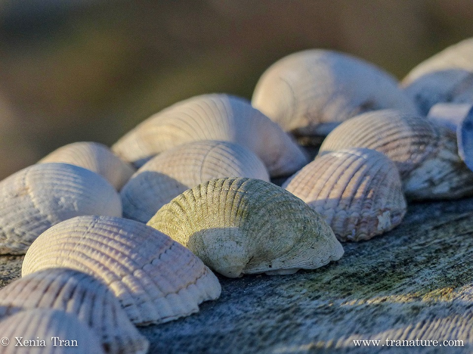 close-up shot of seashells on wood catching the morning sun