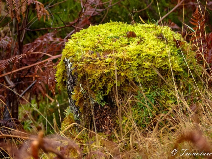 close-up shot a tree stump covered in moss and surrounded by brown fern