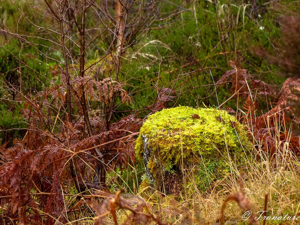 a tree stump covered in moss and surrounded by brown fern