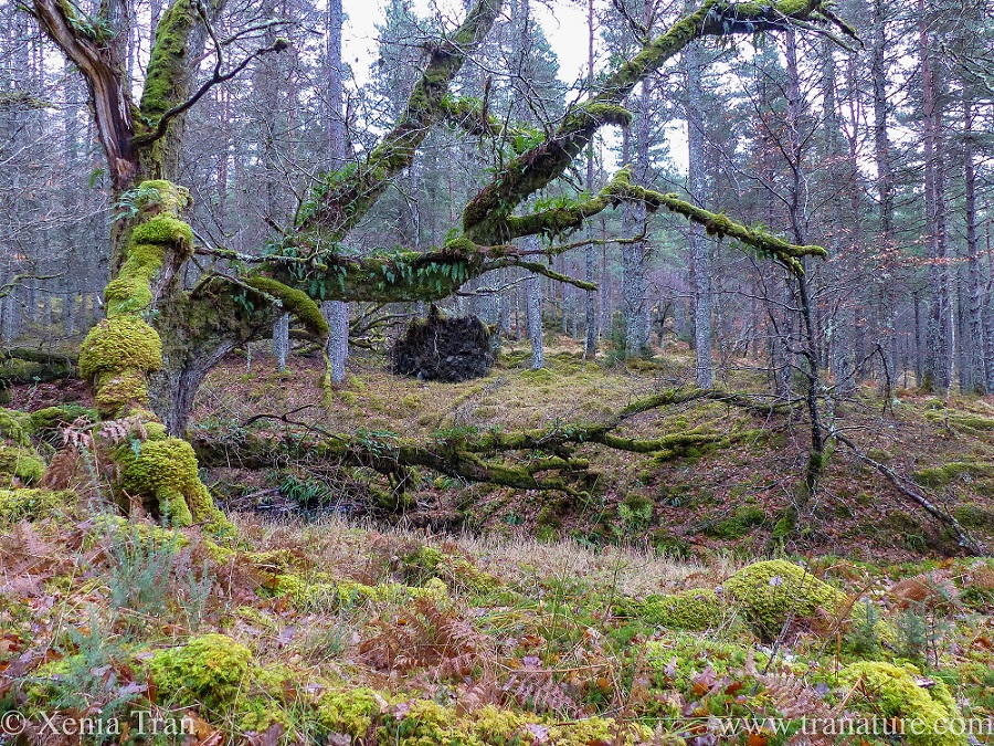 A dead tree offering life to vine, lichen, mosses and more