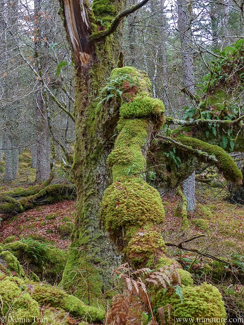 close up of a dead tree offering life to vine, lichen, mosses and more