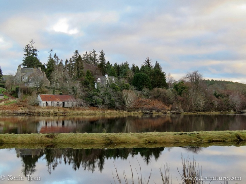 a barn and farmhouse beside birch and pine trees reflected in the water
