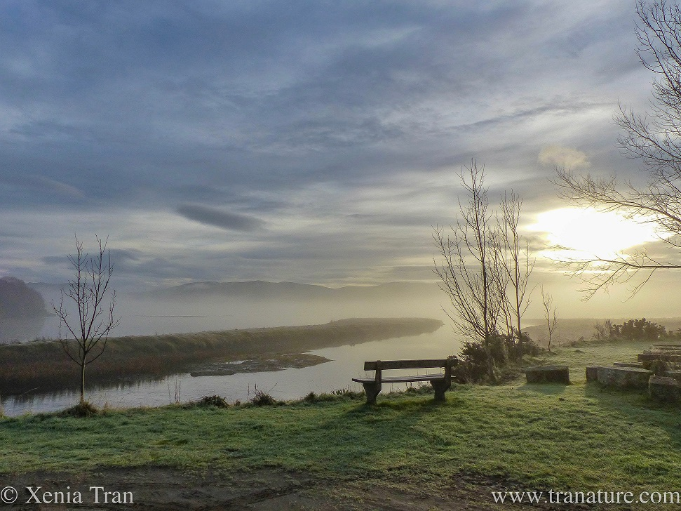 morning mist lifting above the Dornoch Firth, a wooden bench in the foreground