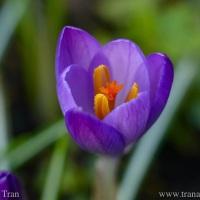 Silent Sunday: Violet Flame