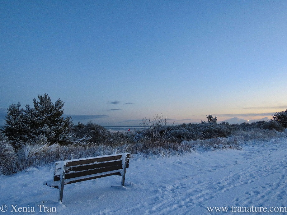a snow covered wooden bench beside the dunes overlooking the Moray Firth