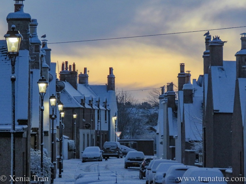 view down a snow covered street in the Fishertows at day break