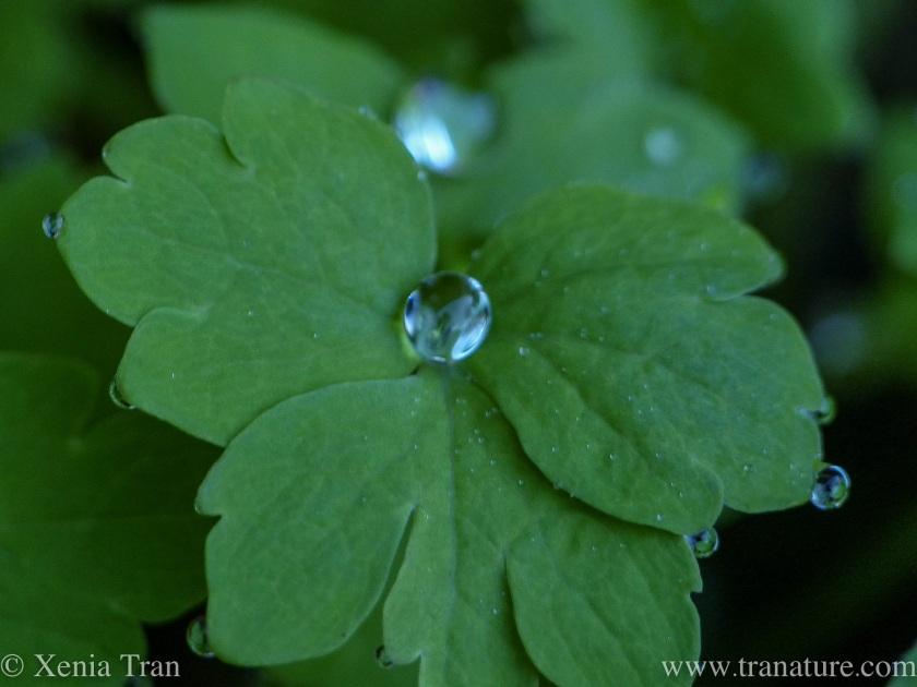 macro image of raindrops on a poppy leaf