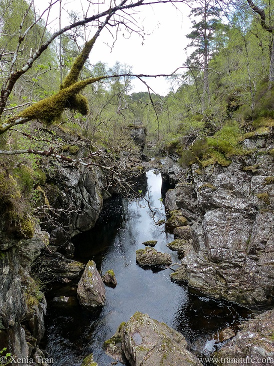 view of the River Affric near Dog Falls, with moss growing on a branch in the shape of a deer's head and neck