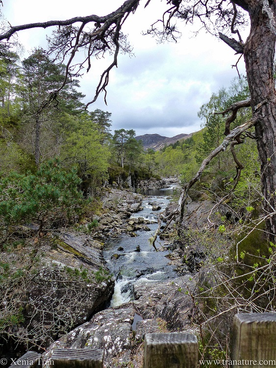 view along the River Affric above Dog Falls in Spring