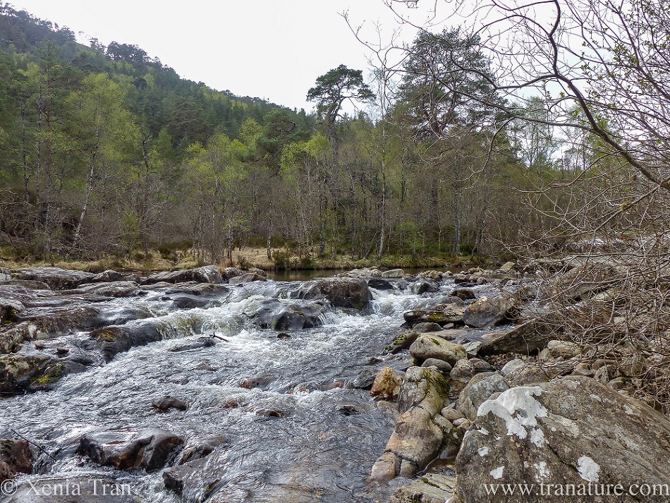 view of the River Affric from the north bank with small waterfalls in Spring