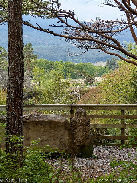 wooden seat overlooking Raven's Rock Gorge and beyond with a sculpted owl in the back rest