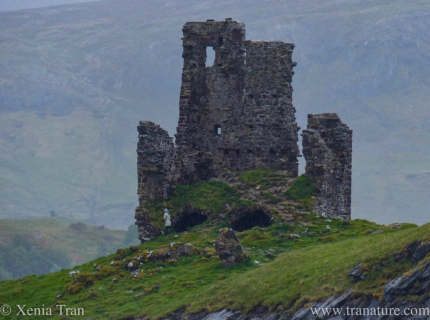 The ruin of the tower of Ardvreck Castle in the Spring rain