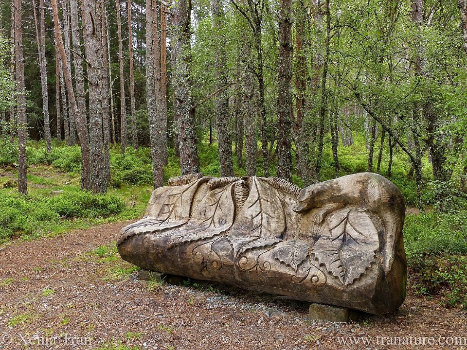 a sculpted wooden seat with birch leaves carved in the wood and an otter resting