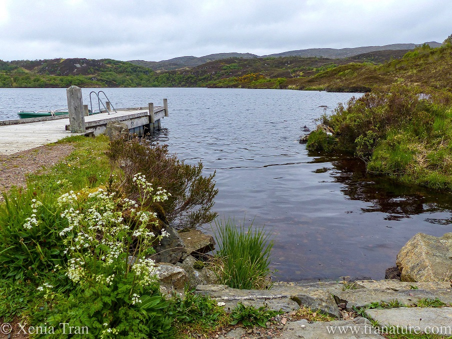 fishing jetty at a lochan by Leitir Easaidh on a cloudy and damp morning