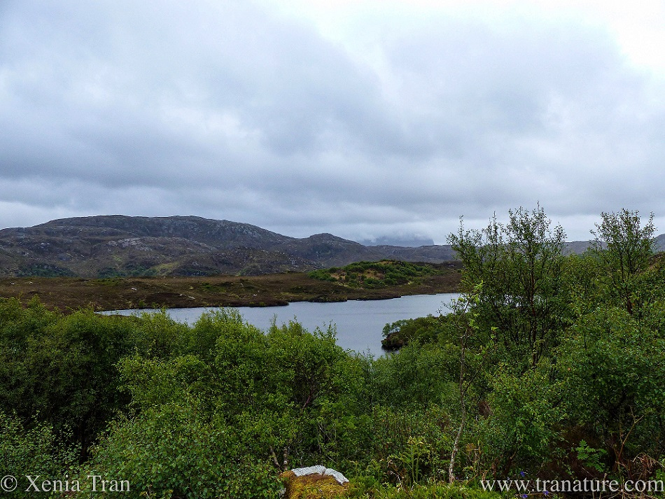 view across Loch Leitir Easaidh, with Quinag's cliff barely visible in the distance through the heavy cloud