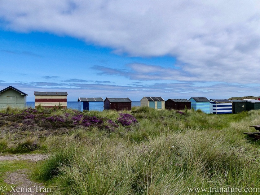 view of ten colourful beach huts in the dunes overlooking the Moray Firth