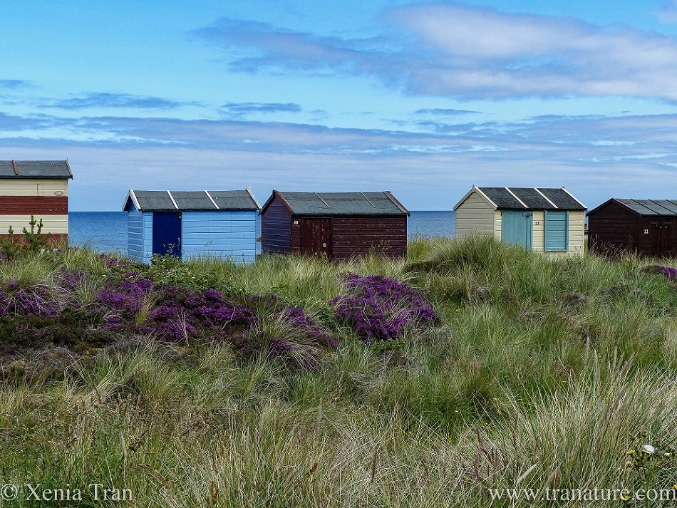 five colourful beach huts on the edge of the dunes overlooking the sea