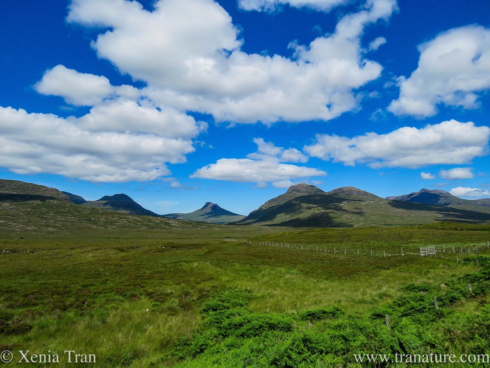 the Coigach landscape under a blue sky with cotton wool clouds