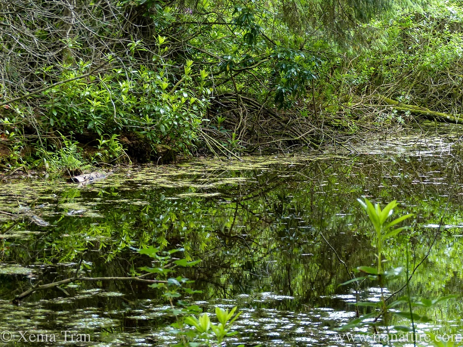 close up shot of leaves and shrubs overhanging a small forest pond