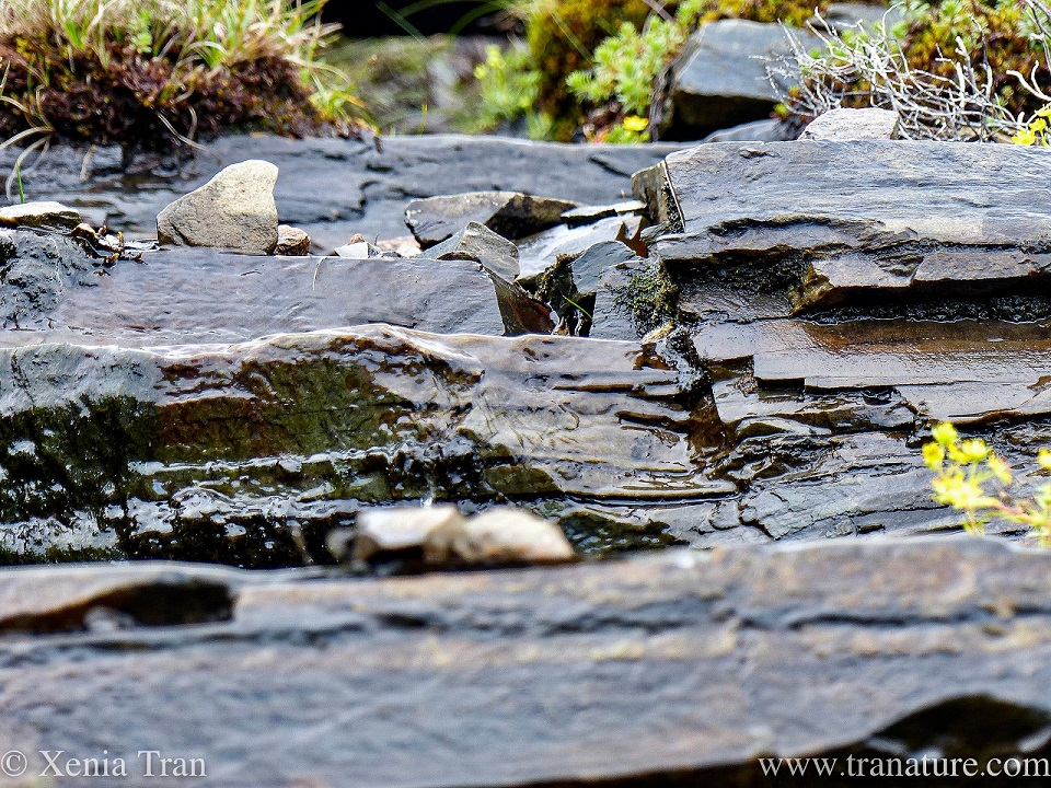 close up shot of ancient rocks on the mountain, clear water running down