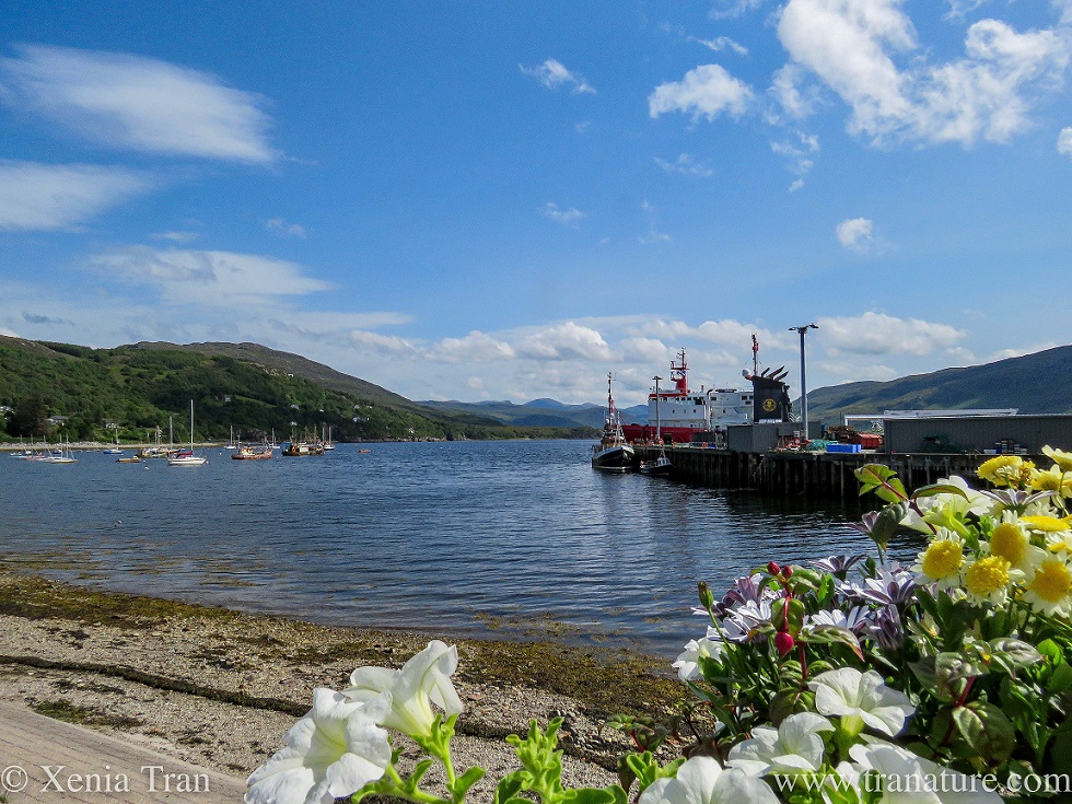 flowers in the foreground by the ferry terminal in Ullapool