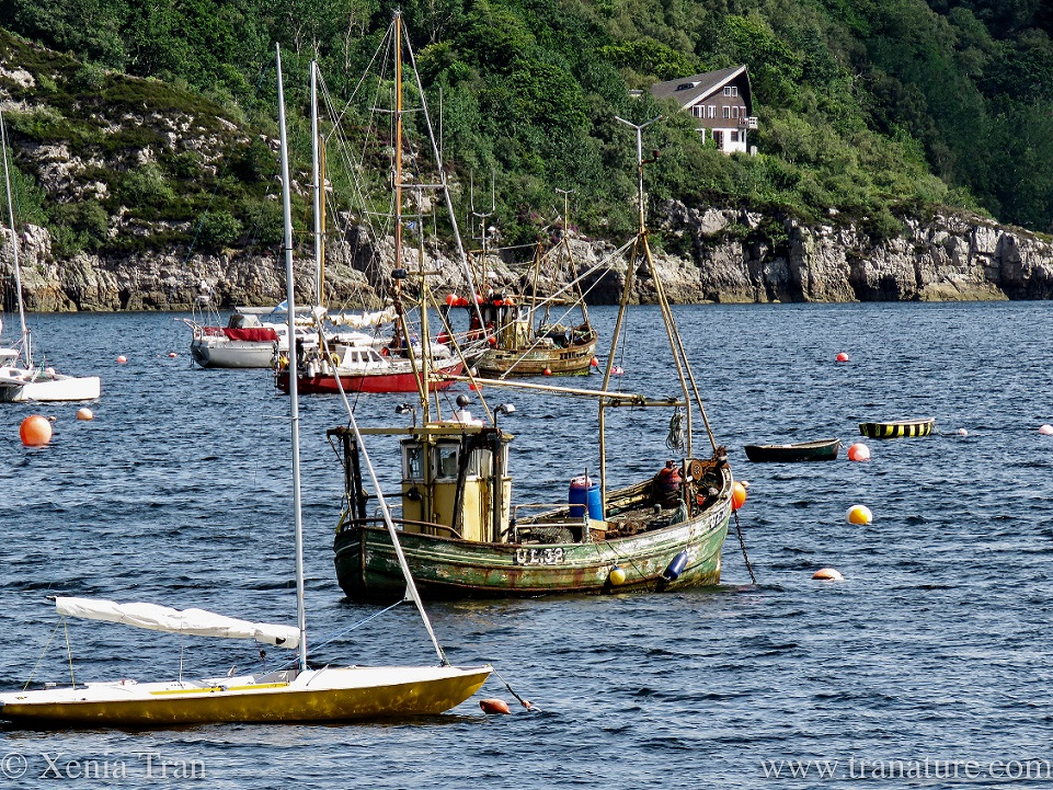 two old fishing boats anchored among leisure boats and rowing boats by Ullapool