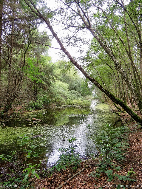 view of a small pond flanked by trees leaning across the water
