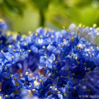Tuesday Photo Challenge: Fuzzy Blue