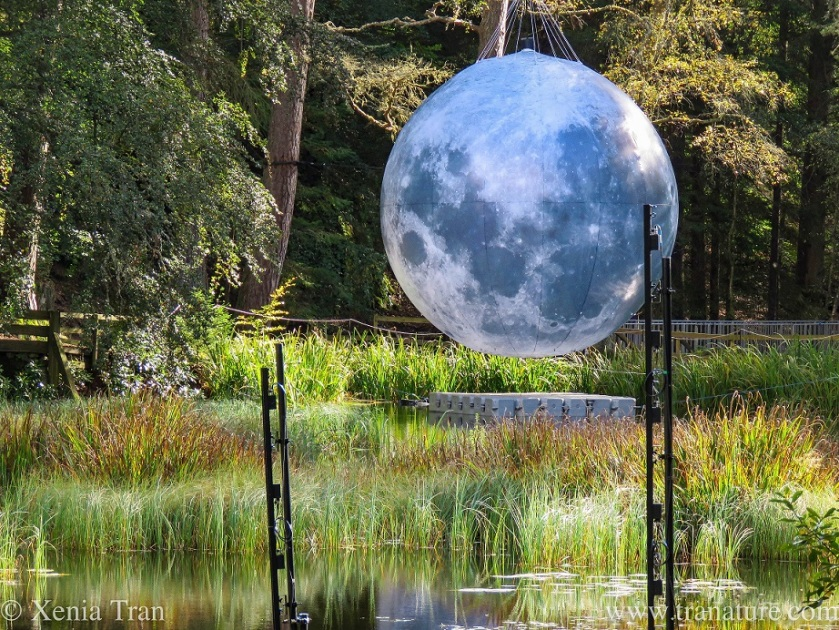 close up shot of a a full moon art work suspended in Faskally Wood