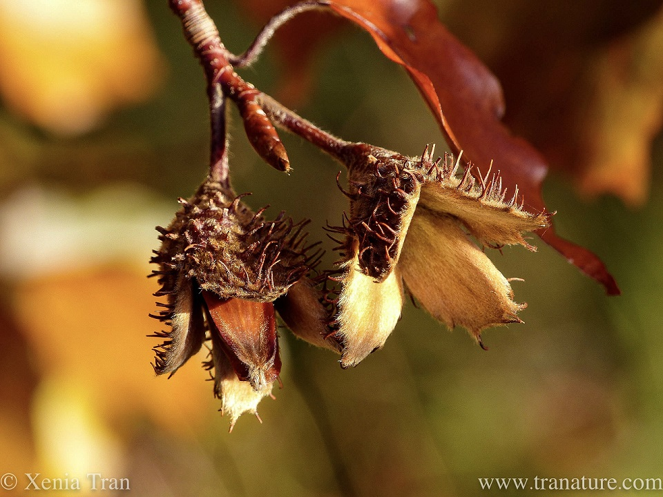 Haiku: Forest Flavours
