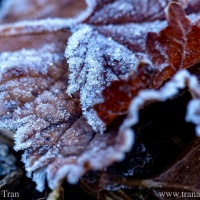 Tanka: Hoarfrost