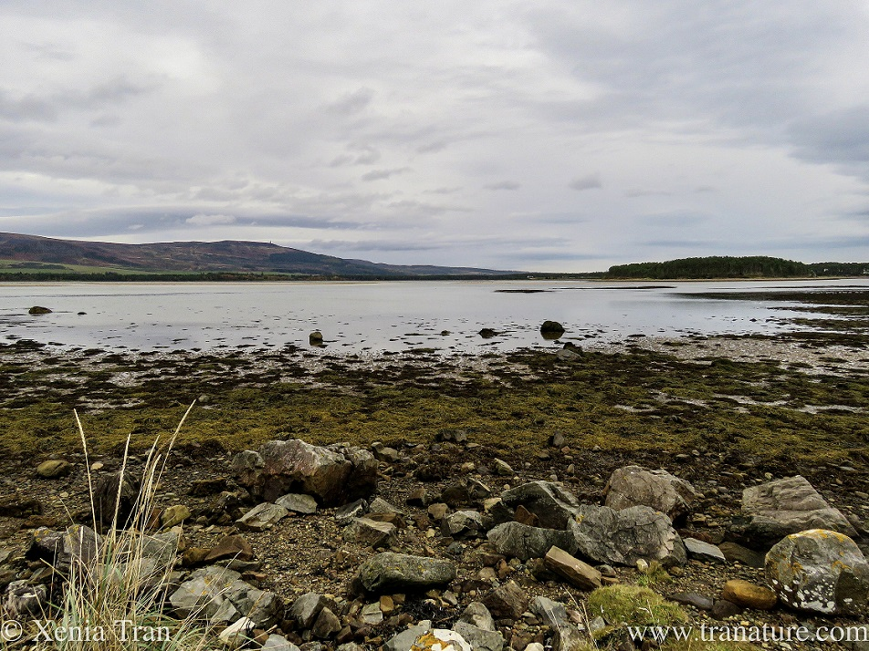 tide flowing out at Loch Fleet Nature Reserve