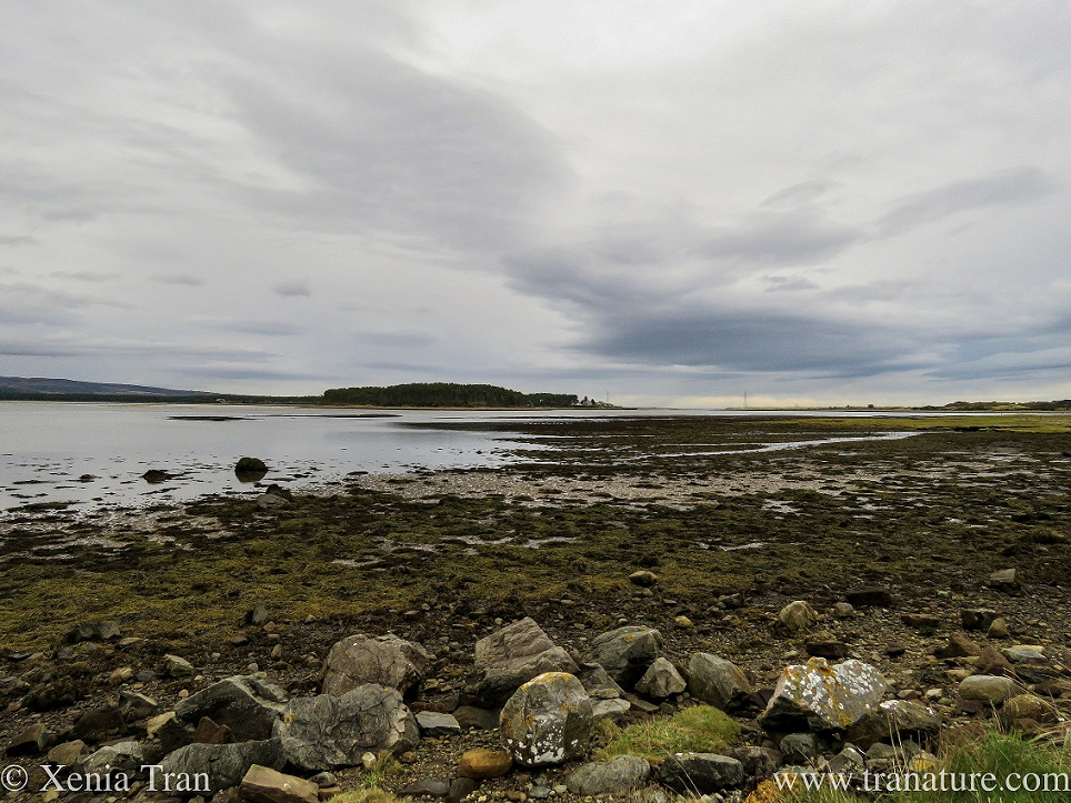 Silent Sunday: Loch Fleet Nature Reserve
