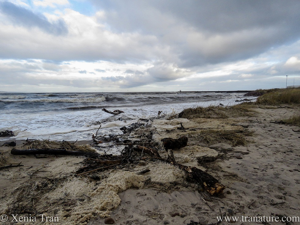 driftwood trees in the sea and on the beach covered in seafoam