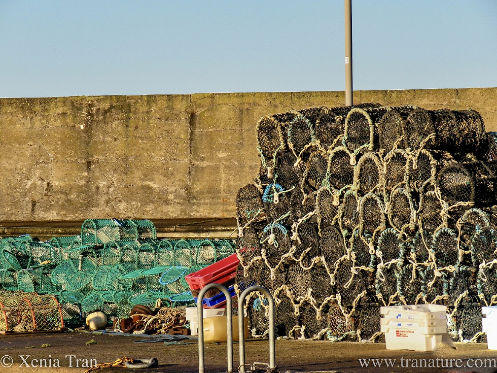 lobster pots and creels on the quayside in the morning sun
