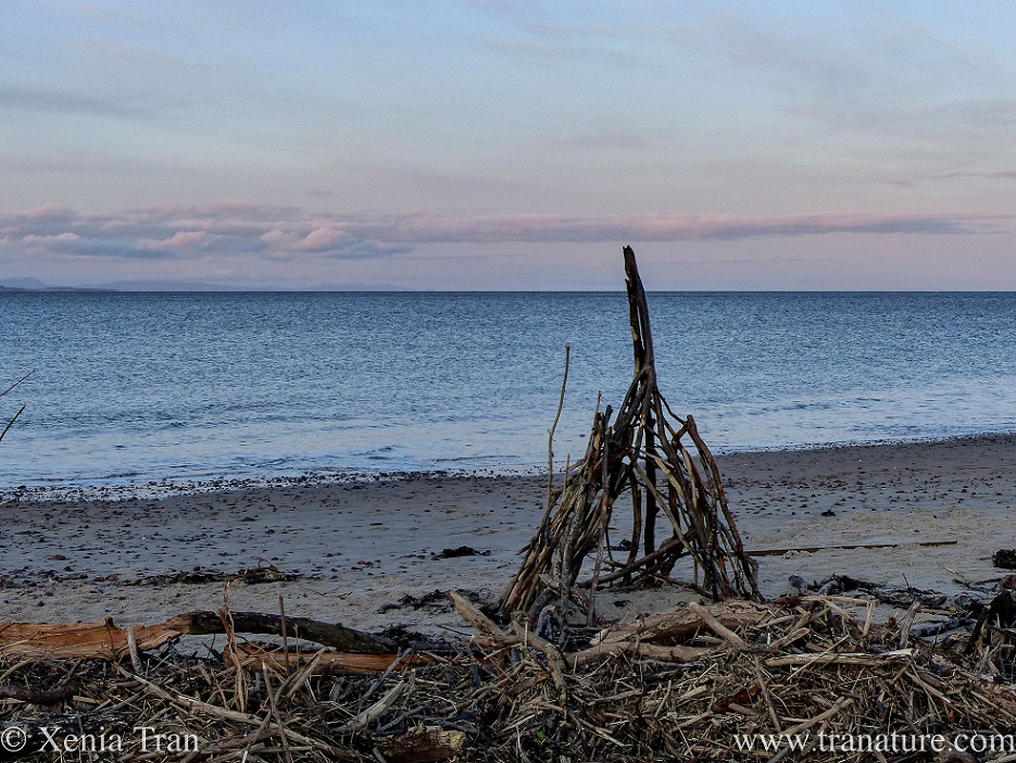 a driftwood wigwam on the beach at twilight