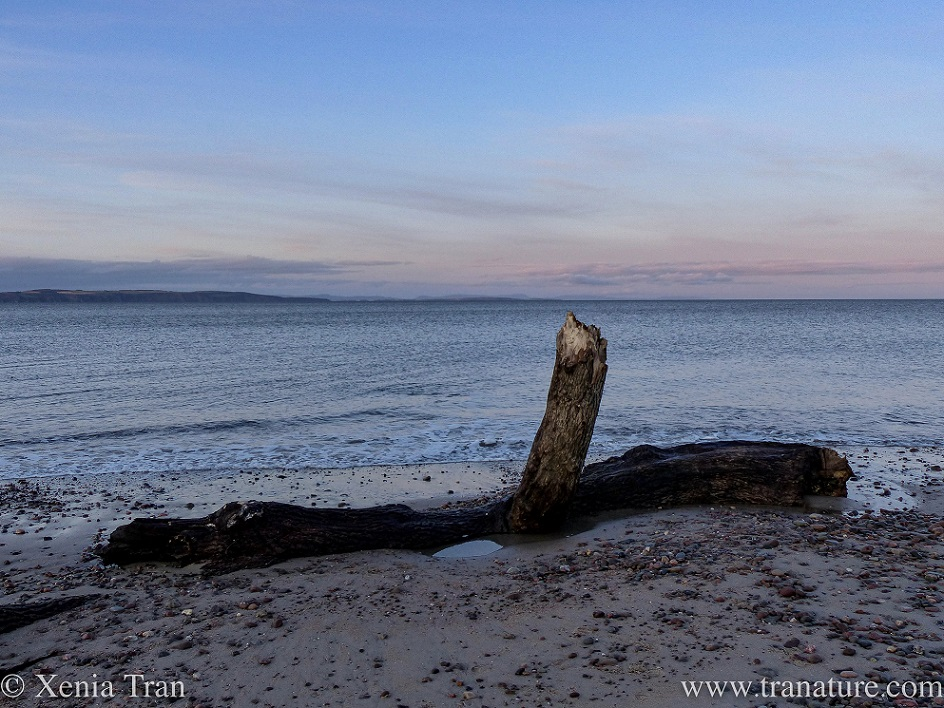 a large piece of driftwood on the tidal line at twilight