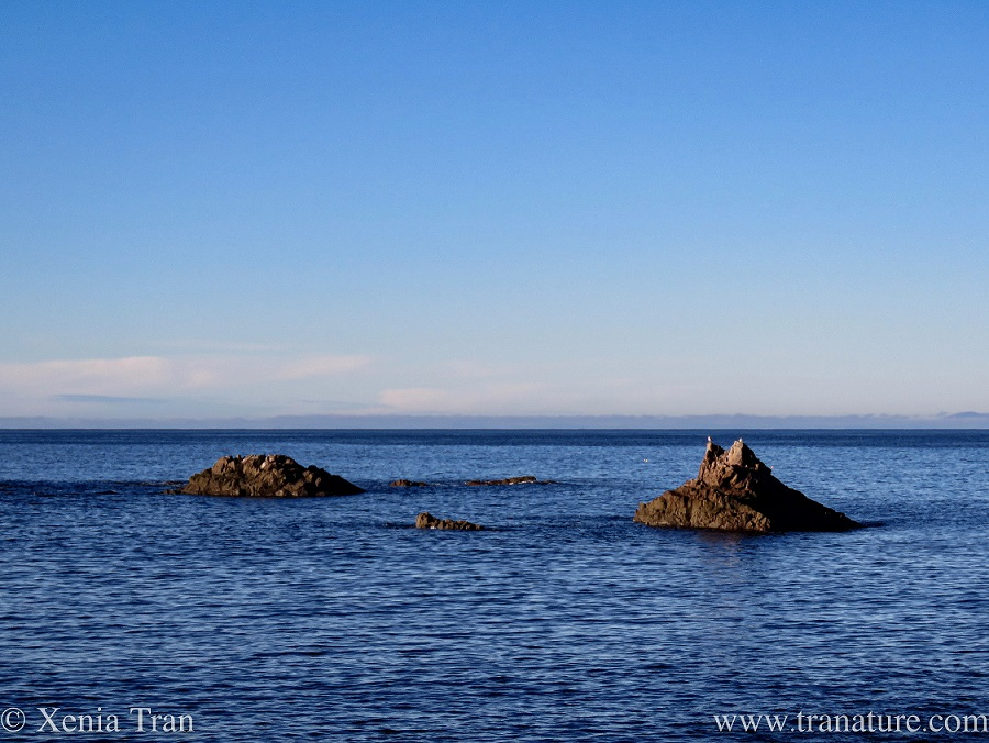 rock formations in the Moray Firth on a Winter's morning