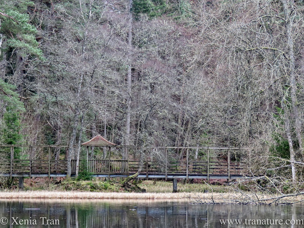 a wooden footbridge at Loch Dunmore with a red tiled pergola in Winter