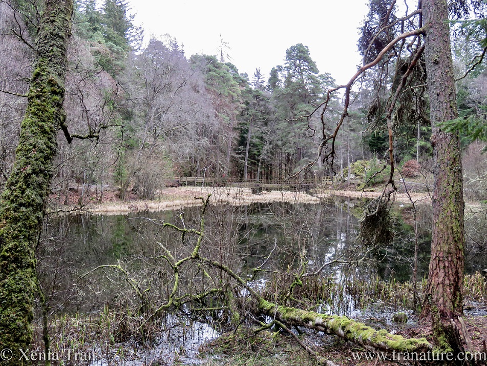 a fallen tree on the shore of Loch Dunmore in Winter