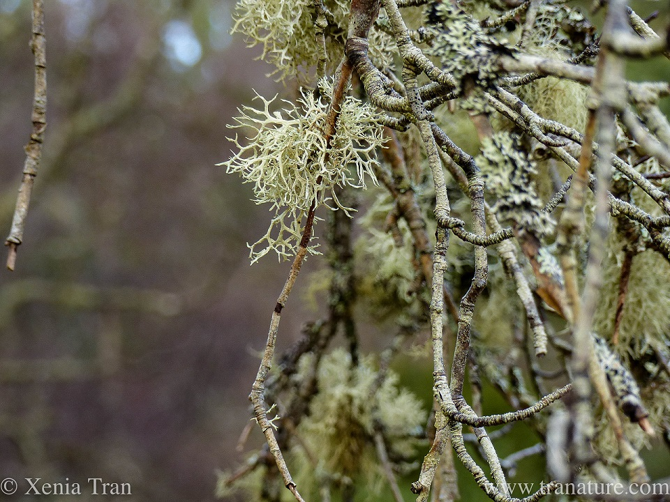 lichen and moss on branches in a winter forest