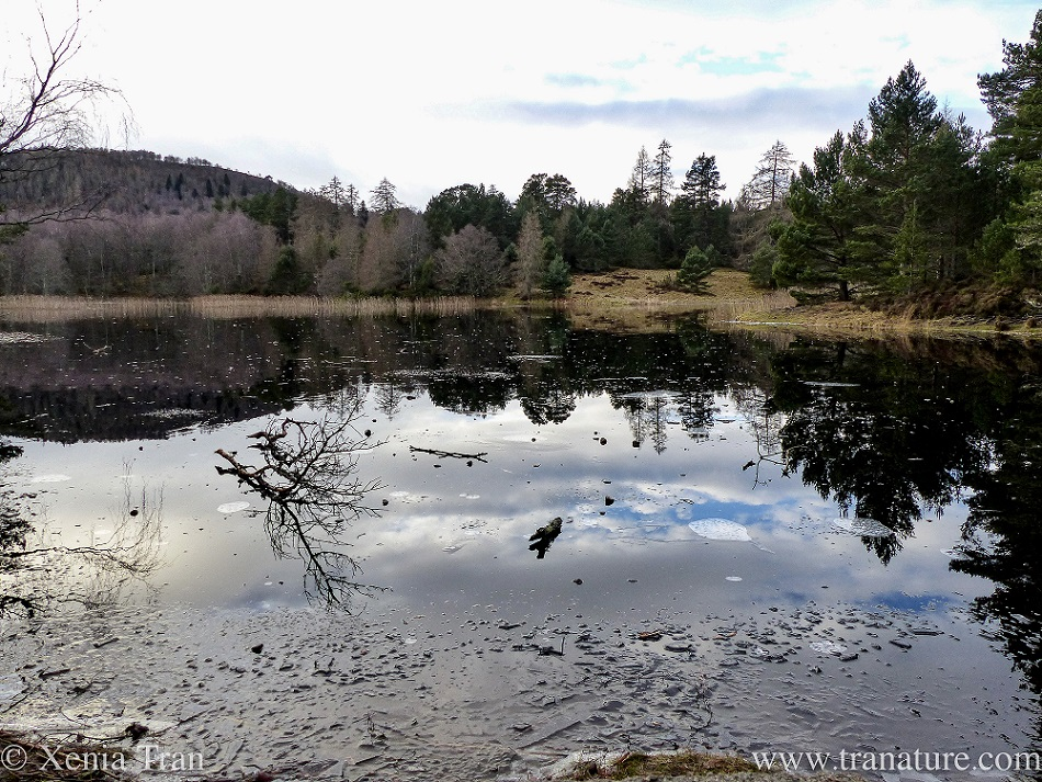 a frozen Lochan Mor with fallen branches on the ice