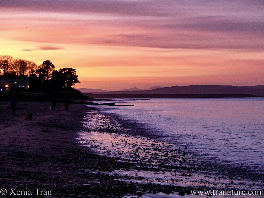 sunset along the Moray Firth with the tide rolling out
