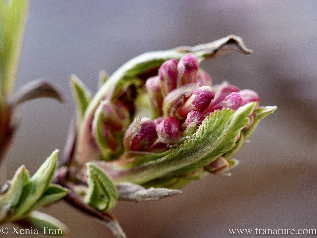 Wordless Wednesday: Winter Flower