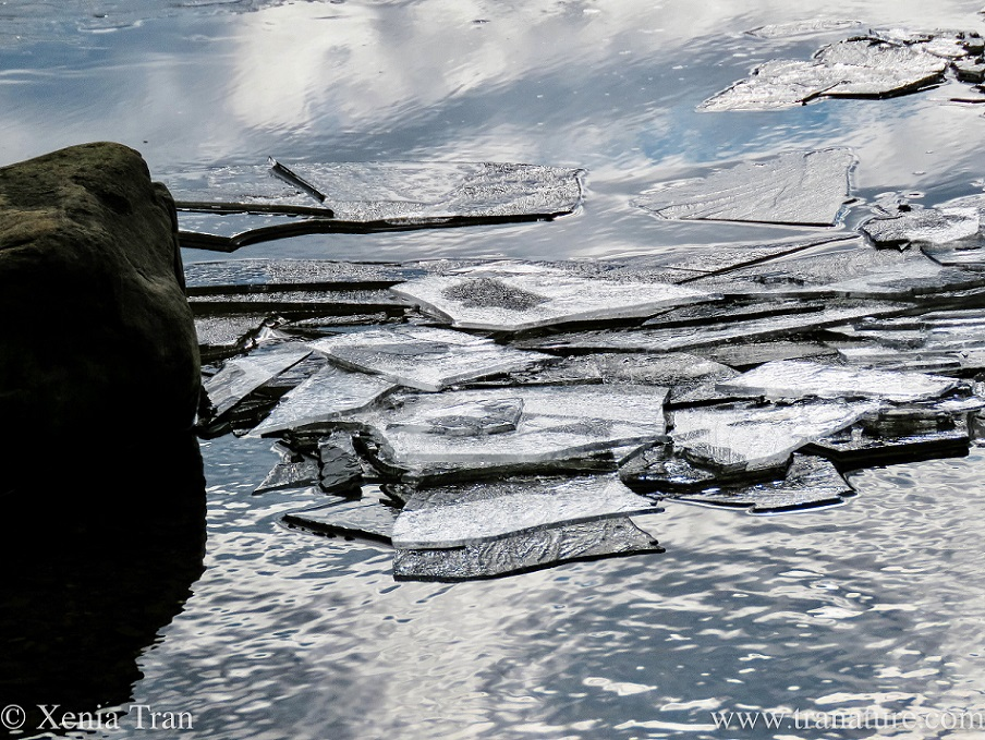 close up of melting ice on the loch beside a rock