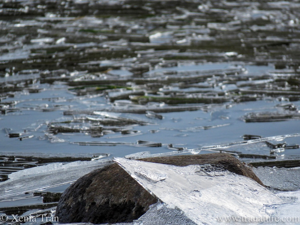 close up shot of melting ice on the loch's surface